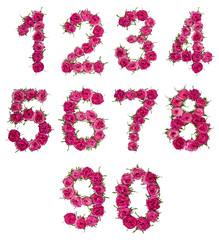 Set of arabic numbers from natural red flowers of roses, isolated on white background