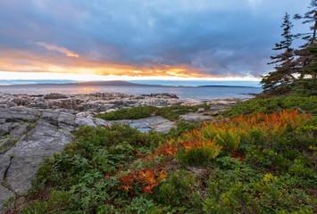 Printed kitchen splashbacks Coast Ferns And Shoreline Sunset In Acadia National Park