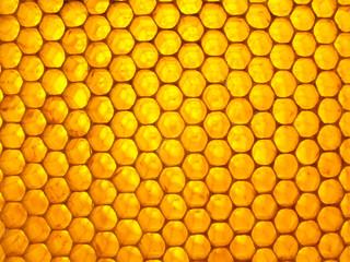 Honeycomb full of fresh sweet honey. Natural texture