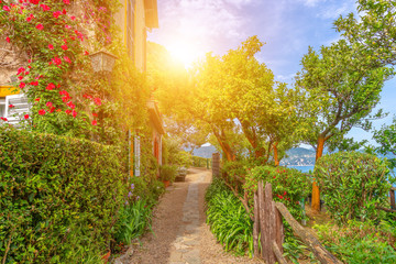 Fototapete - Beautiful green alley in Portofino, Italy, Europe