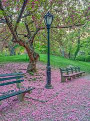 Central Park, New York City in spring