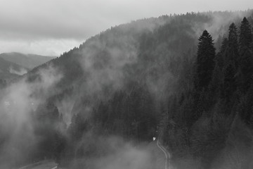 Misty morning in Black Forest. Misty mountains. Misty forest.