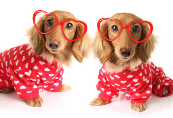 two Dachshund puppy dogs wearing red valentines day pajamas with white hearts.