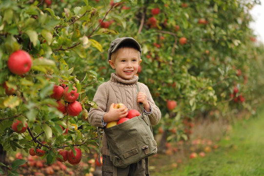 A small smiling boy stands in an apple orchard and holds a bag of apples