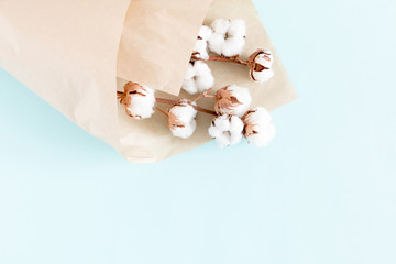 Flowers holiday composition. Cotton flowers on branch on pastel blue background. Flat lay, top view, copy space
