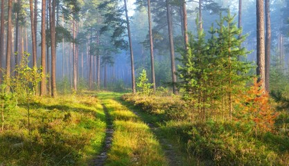 A road and foggy sunrise in the deciduous forest in Latvia.