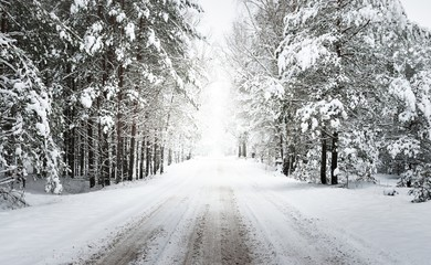 Unpaved winter forest road under a layer of fresh snow in Latvia