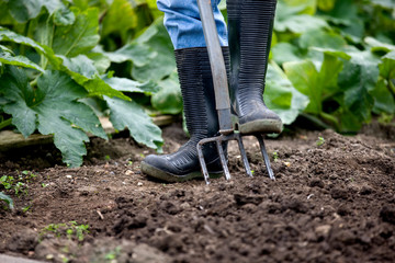 Detail of man with garden fork digging on allotment