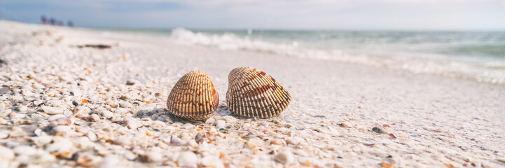 Seashells shelling activity on shell beach in Sanibel, Fort Myers , South Florida banner panorama background, USA travel.