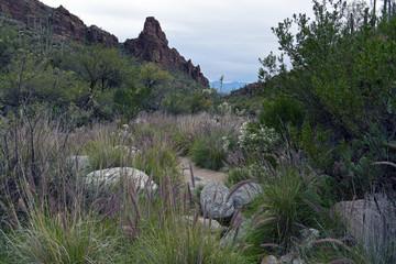 View from Ventana Canyon towards Tucson, Arizona