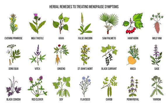 Best herbs for menopause symptom treatment