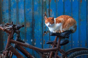 Tigerkatze schläft auf Fahrrad, vor blauer Tür.
