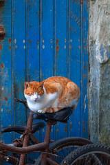 Tigerkatze schläft auf Fahrradsattel, vor blauer Tür.