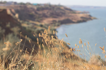 Selective focus on the stems of dry grass on top of a cliff above the sea