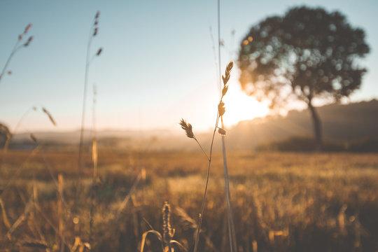 Natur Eifel Sonnenaufgang  Feld Wiese