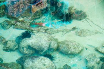 Beautiful colorful fish in the aquarium, Vietnam