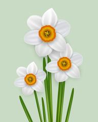 Photo sur Aluminium Spring flowers bouquet, narcissus white flowers