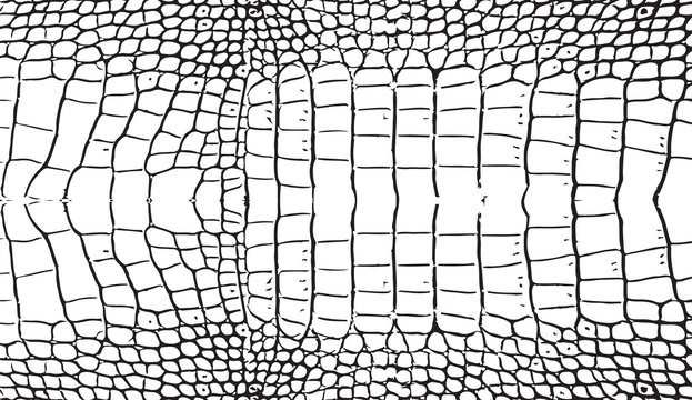Seamless monochrome black and white pattern. Vector. Texture snake. Fashionable print. Fashion and stylish background