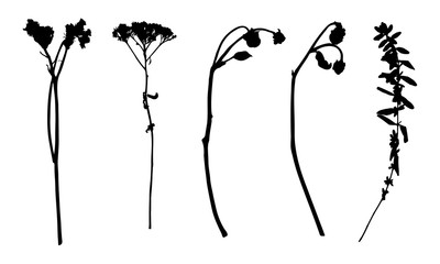 Collection of vector black silhouettes of wild plants and flowers. Isolated on white background. Design objects for decoration, textile, poster, card, invitation, announcements, advertisement.