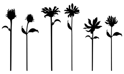 Set of vector black silhouettes of flowers. Isolated on white background. Design objects for decoration, textile, poster, card, invitation, announcements, advertisement.