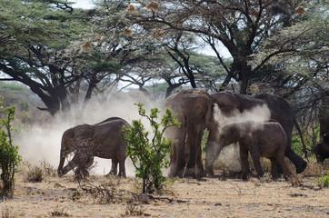 Wildlife in Afrika