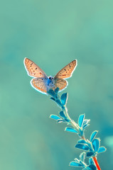 Self adhesive Wall Murals Butterfly Closeup beautiful butterfly sitting on flower