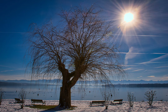 Baum in der Wintersonne