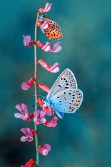 Printed kitchen splashbacks Butterfly Closeup beautiful butterfly sitting on flower