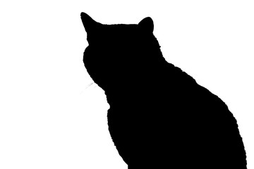 black isolated cat silhouette sits on white background, cat silhouette sitting on white