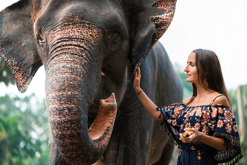 portrait of a big elephant and a young girl