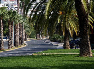 road in palm trees