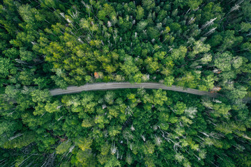 A dirt road in a lush green forest