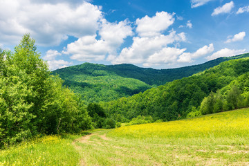 path through beautiful summer countryside. grassy meadow among the forest. trees along the road. wonderful nature scenery of Carpathian mountains