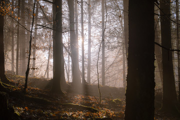 Sunlight in a misty forest.