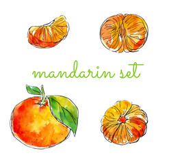 watercolor hand-drawn set of citrus: mandarin. Great for packaging juices, ice cream and other citrus fruit products