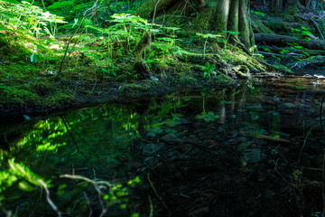 Hidden Pool in the Forest by Skip Weeks