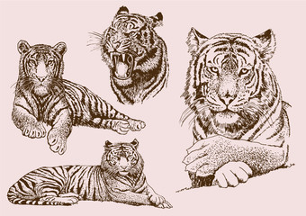 Graphical vintage set of tigers ,vector sepia illustration,tattoo and logo design