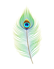 Peacock feather, realistic vector illustration. Decor element for design