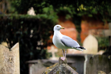 Seagull sitting on stone