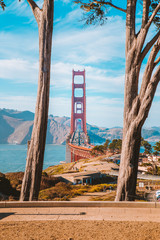 Wall Mural - Golden Gate Bridge with cypress trees at Presidio Park, San Francisco, California, USA