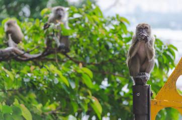 Monkey with view to whole city of Kuala Lumpur