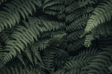 Fern's Throat - Ancient Forest, B.C. Wall mural