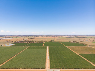 A drone picture of australian apple farm