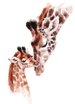 Giraffes Mother and Baby Watercolor hand painted wild animal illustration isolated on white background