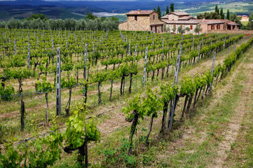 Wall Murals Vineyard Vineyard with a farmhouse in Montalcino, Val d'Orcia, Tuscany, Italy