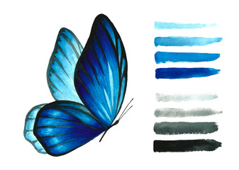 Watercolor blue butterfly and brush