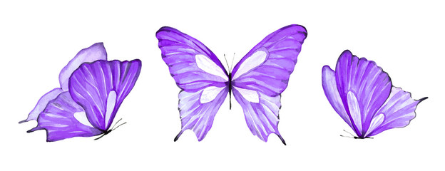Watercolor set of purple butterfly isolated on white background