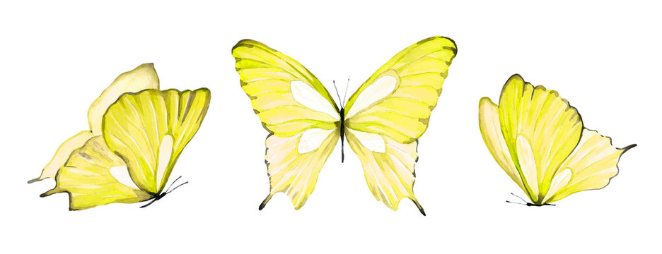 Watercolor set of yellow isolated butterfly on white background