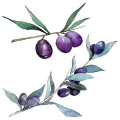 Green and black olive. Watercolor background illustration set. Isolated olive illustration element.