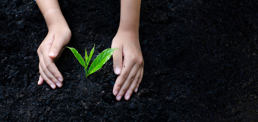 environment Earth Day In the hands of trees growing seedlings. Bokeh green Background Female hand holding tree on nature field grass Forest conservation concept Wall mural